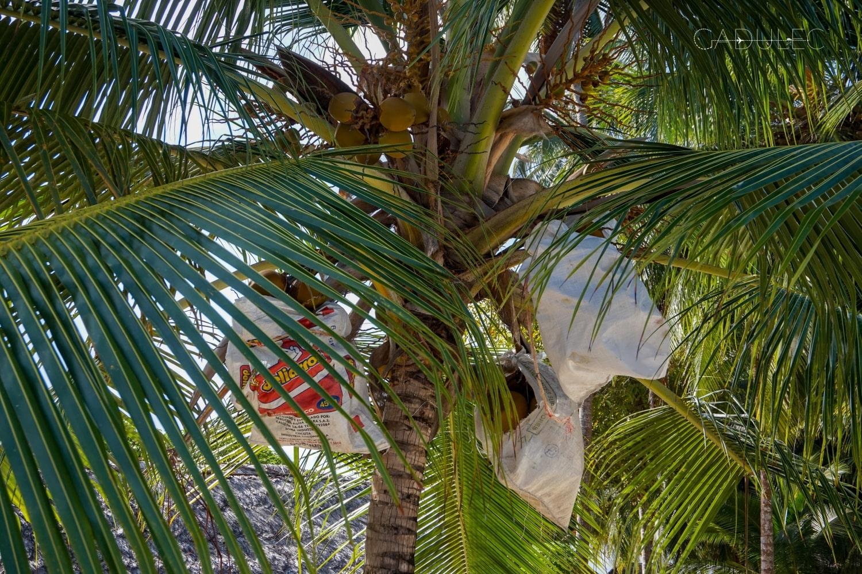 Ten kokos Ci na głowę nie spadnie ;)